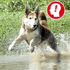 Hunde Fotoshootings Tickets